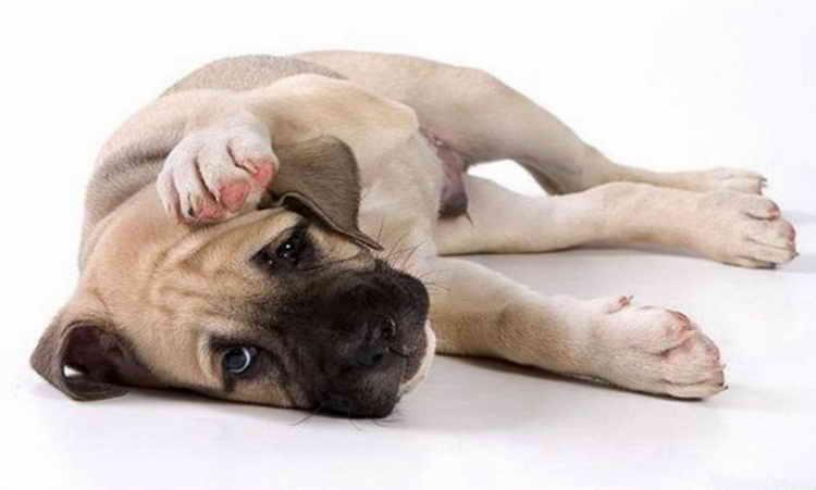 почему собака не ест и вялая