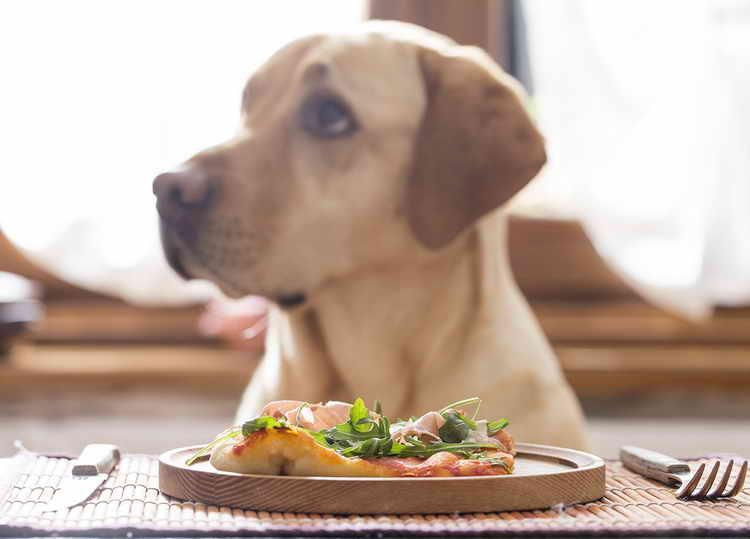 почему собака ничего не ест но активная