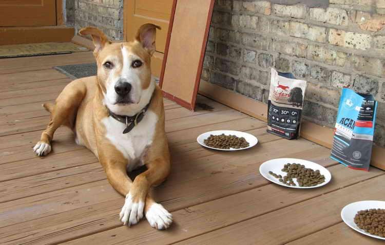 почему собака больше не ест сухой корм