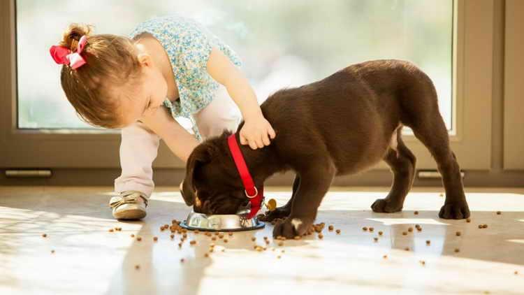 собака не ест сухой корм что делать