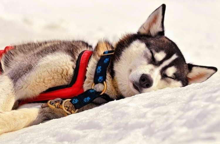 почему собака теряет сознание
