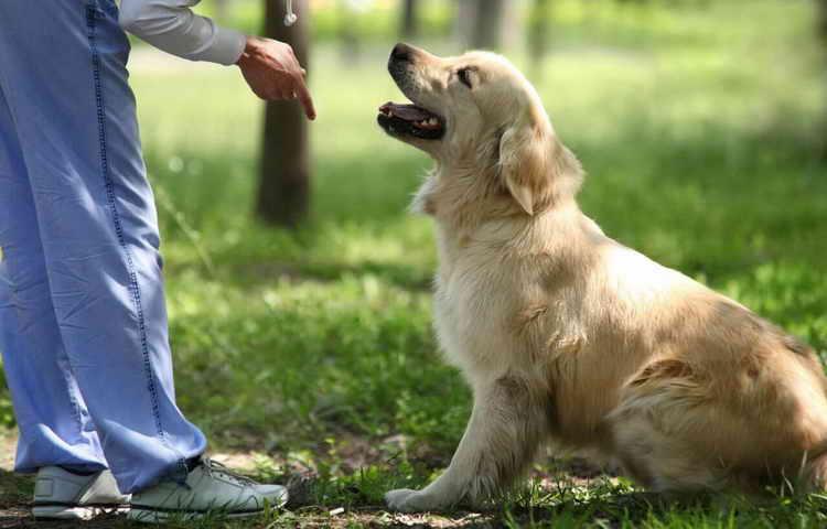 почему собаки едят экскременты человека
