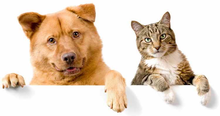 почему собаки не любят уличных кошек