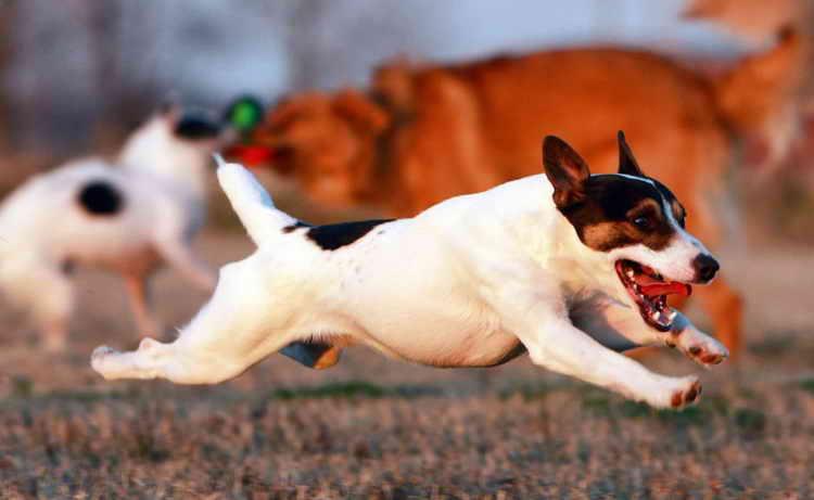 почему у собаки изо рта пахнет рыбой