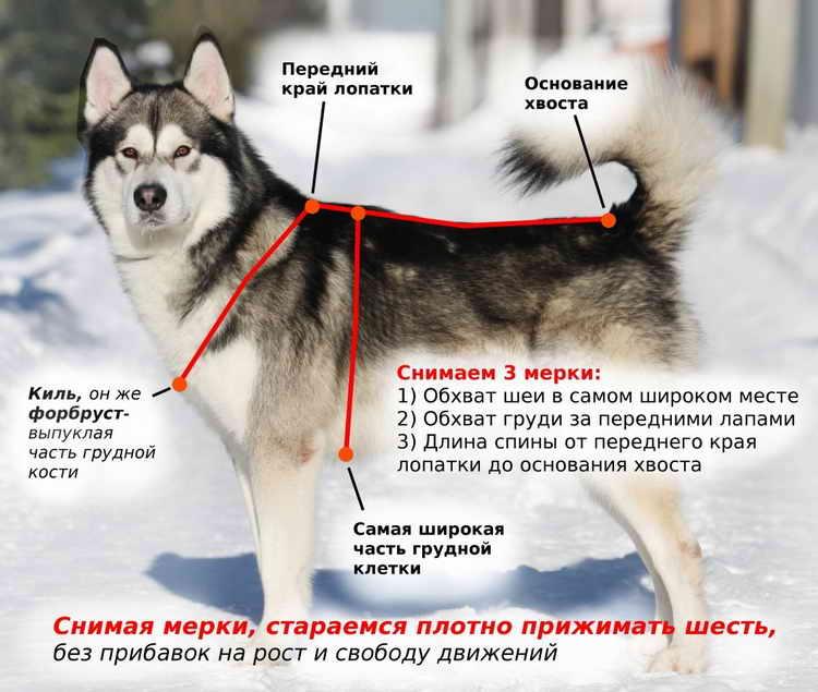 шлейка для собак крупных пород