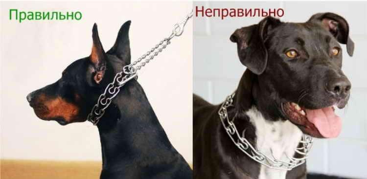 строгий ошейник для собак как пользоваться