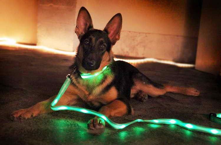 светящийся ошейник для собак с usb зарядкой