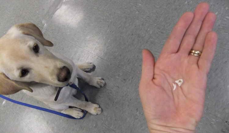 у собаки выпадают зубы