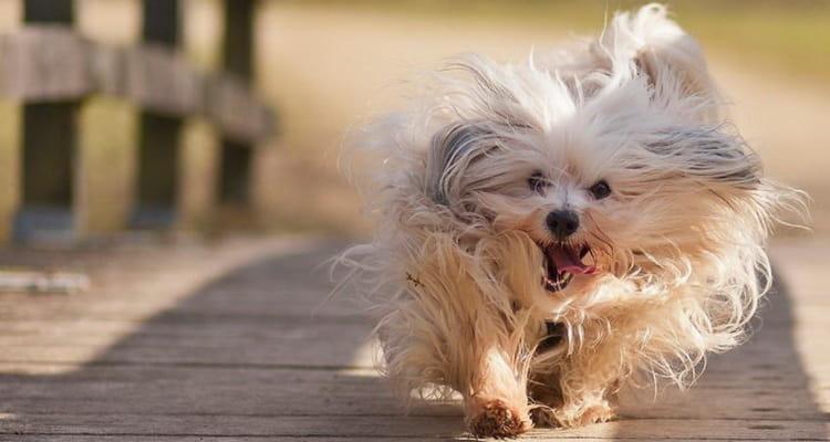 как определить возраст собаки до года
