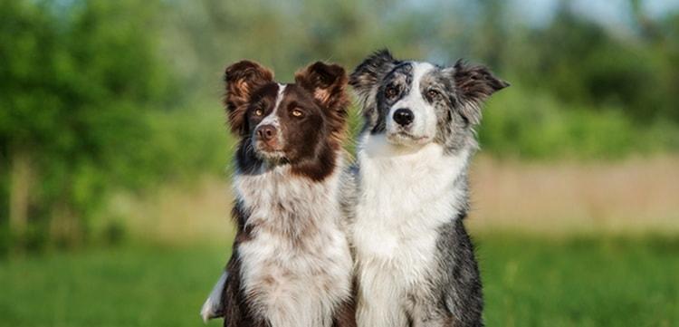 как определить возраст собаки по внешним признакам