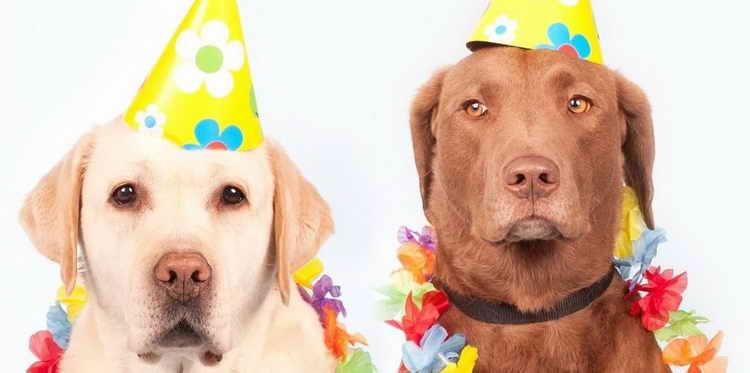 возраст собаки по человеческим меркам таблица