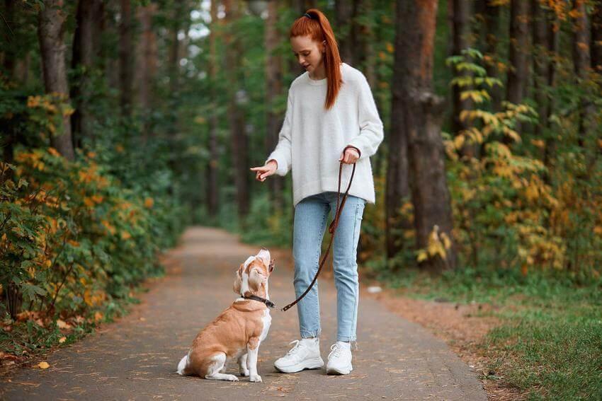дрессировка собак самостоятельно дома с нуля с чего начать
